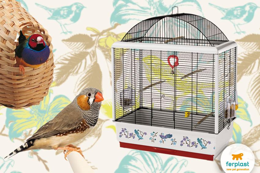 diamante mandarino e diamante di gould con gabbietta per piccoli uccelli Palladio 4 Decor di Ferplast