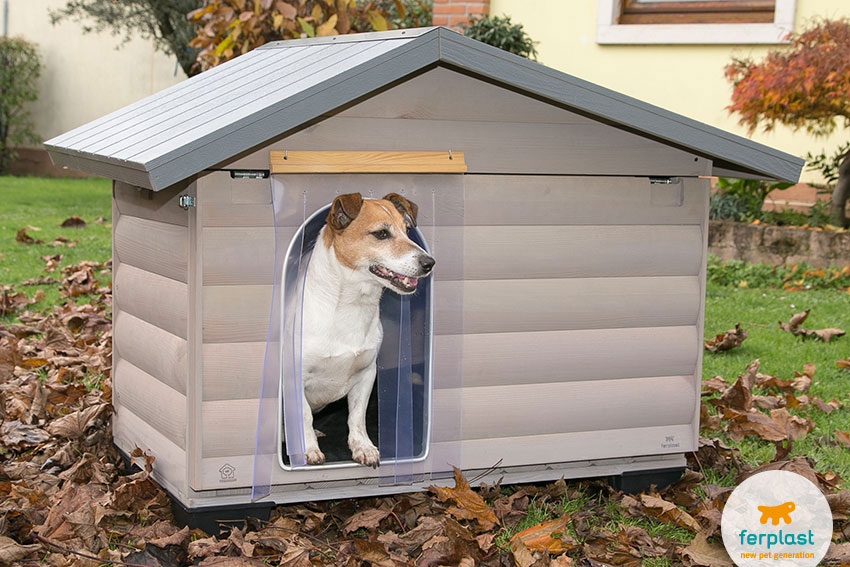 Jack Russell dog inside a wooden kennel