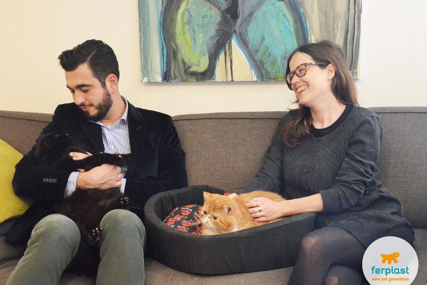 come fazer gatos se darem bem