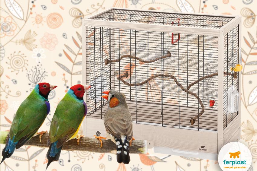 Gaiola para canários e pássaros exóticos pequenos estrutura de madeira