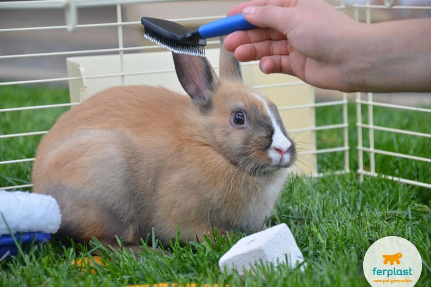 pettine-coniglietto