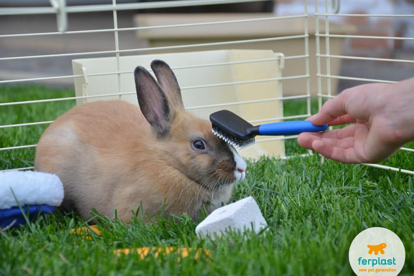 portare-conigli-giardino