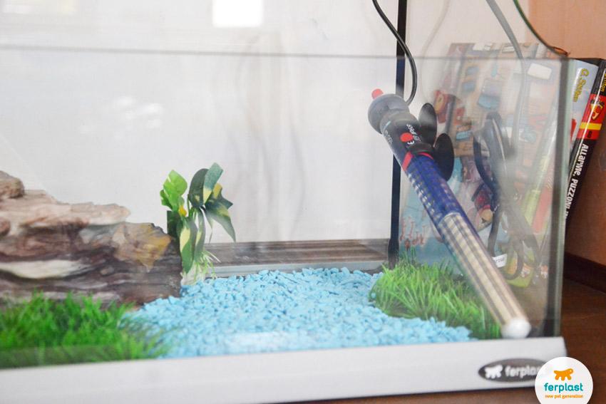 Allestire un acquario per le tartarughe love ferplast for Acqua acquario