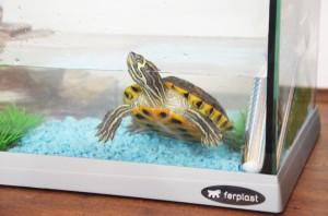5 curiosit sulle tartarughe d 39 acqua scopri le migliori for Acqua tartarughe