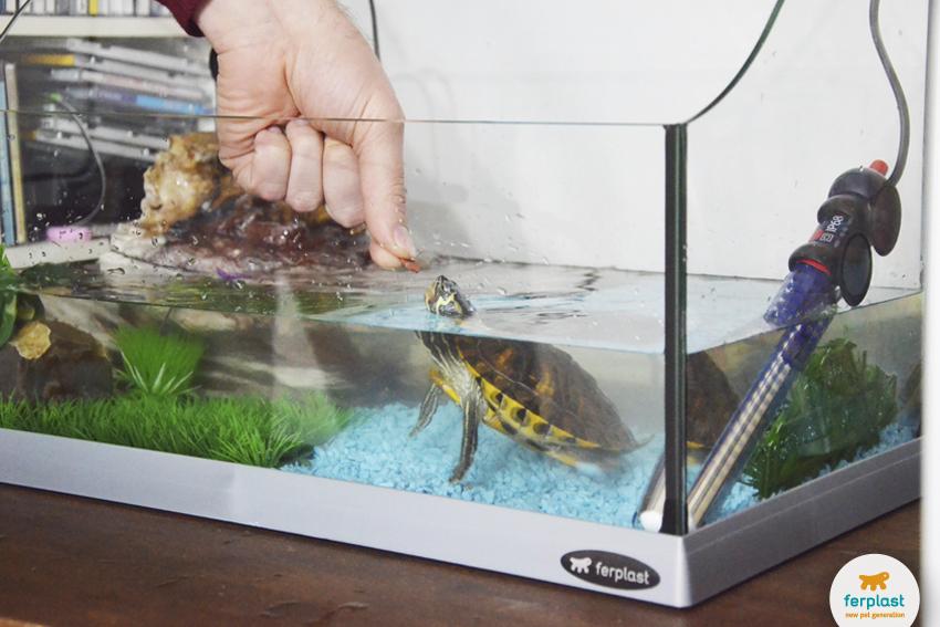 alimentar uma tartaruga aquática