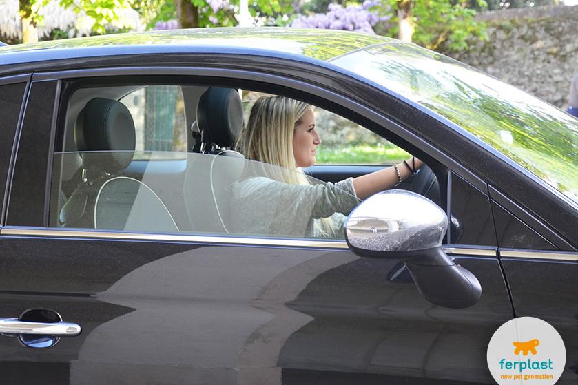 viajar de carro com o seu cão