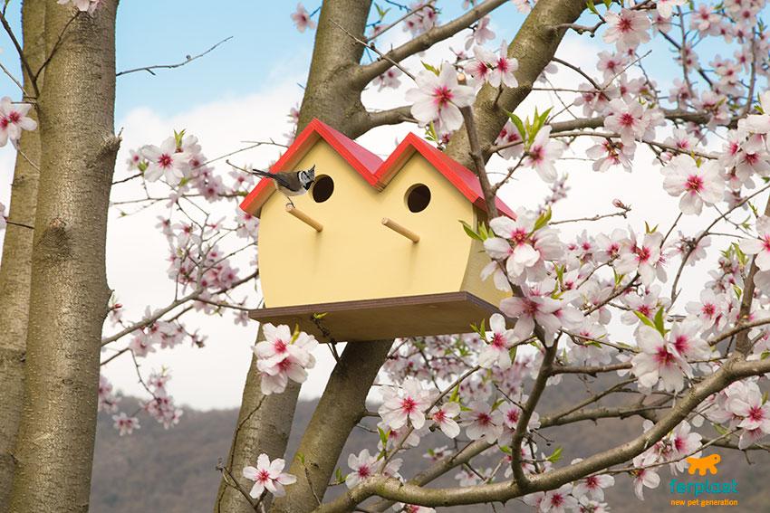casas para pássaros da Ferplast feitas de madeira
