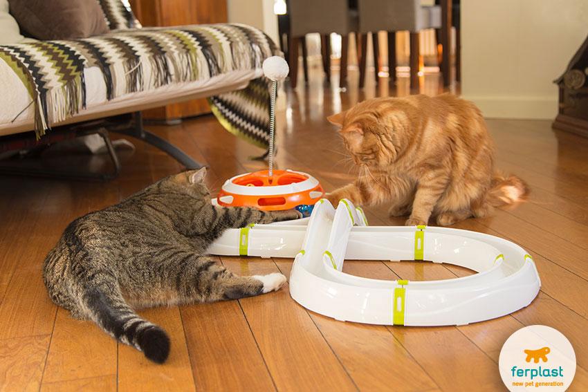 come giocare con il gatto
