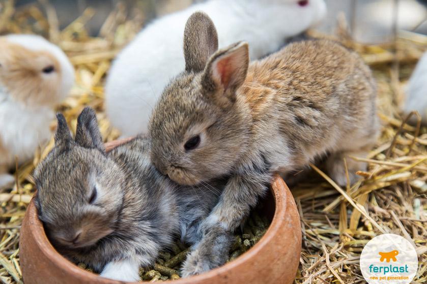 coniglietti-appena-nati