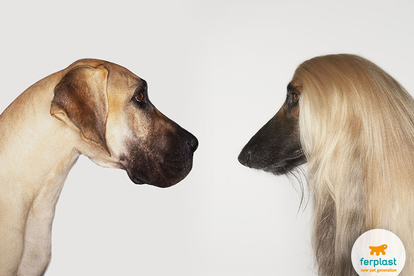 short-haired dog vs long-haired dog