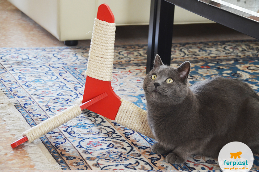 gatto-certosino-tiragraffi