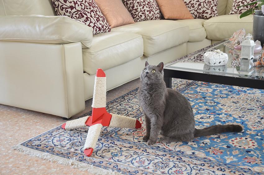 o gato arranha o sofá