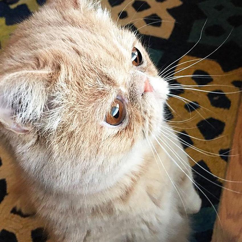 George, o gato que prefere ficar em pé em duas patas