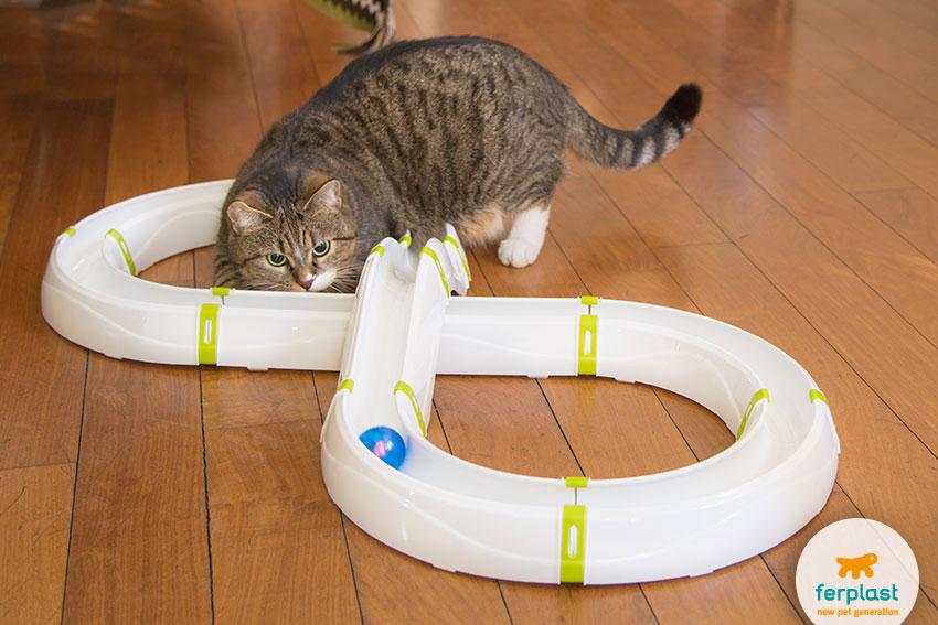 brinquedo mudular com percurso e pequena bola para brincar com o seu gato