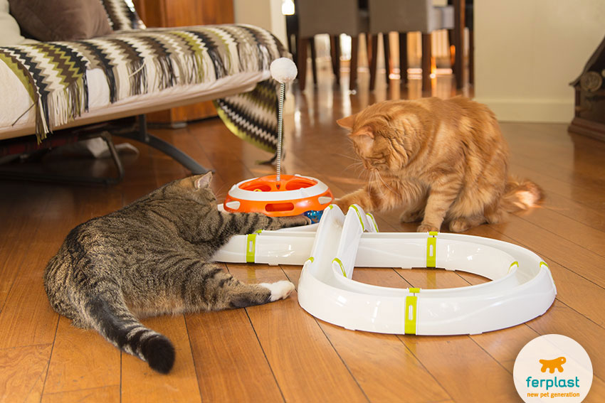 two cats playing together
