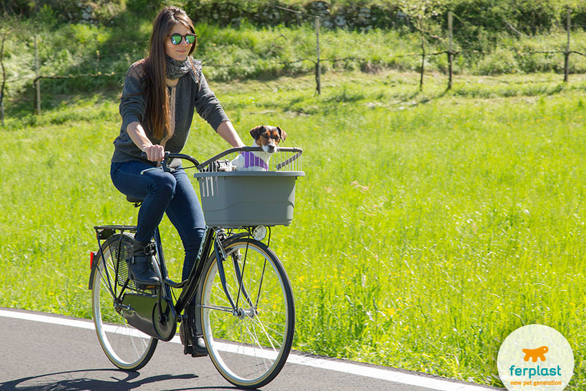 portare il cane in bicicletta