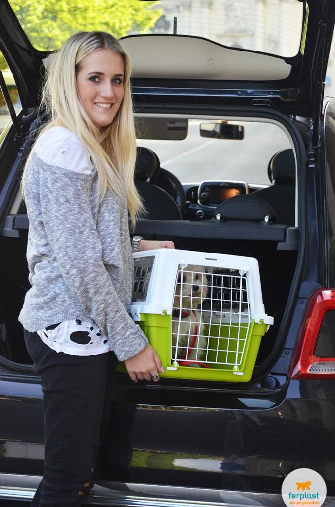 transportar seu cão no carro