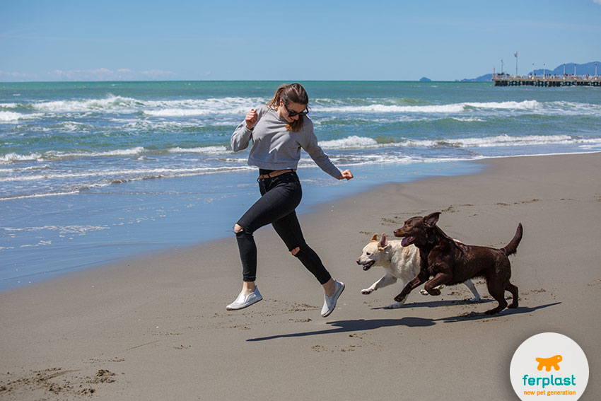 blogger Carlotta Rubatelli with her two beautiful Labrador dogs