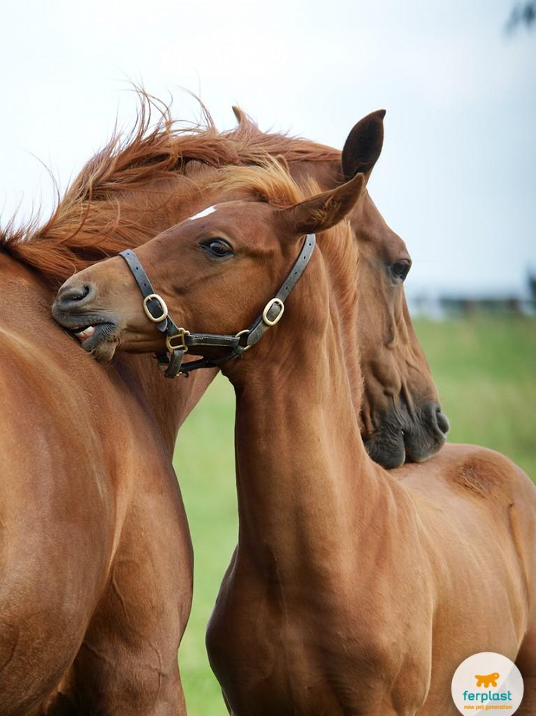 cavalli_che_corrono