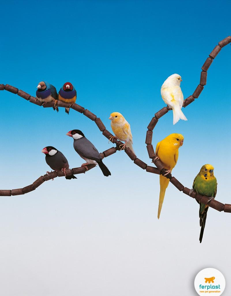 colore_pappagalli