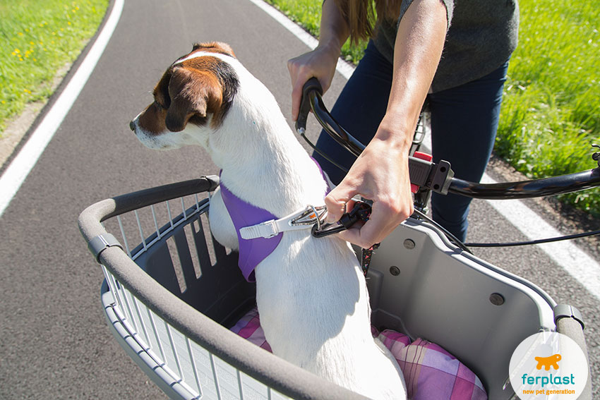 bike carrier for dogs atlas bike by ferplast with safety belt