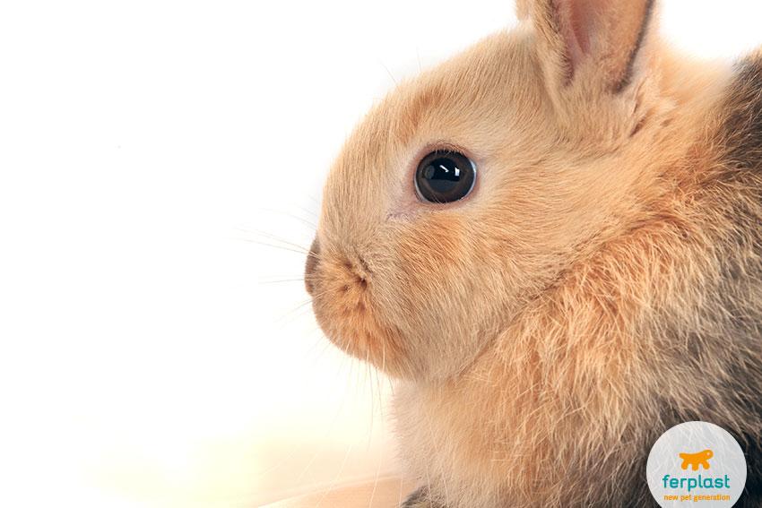 Problemas dentários em coelhos anãos