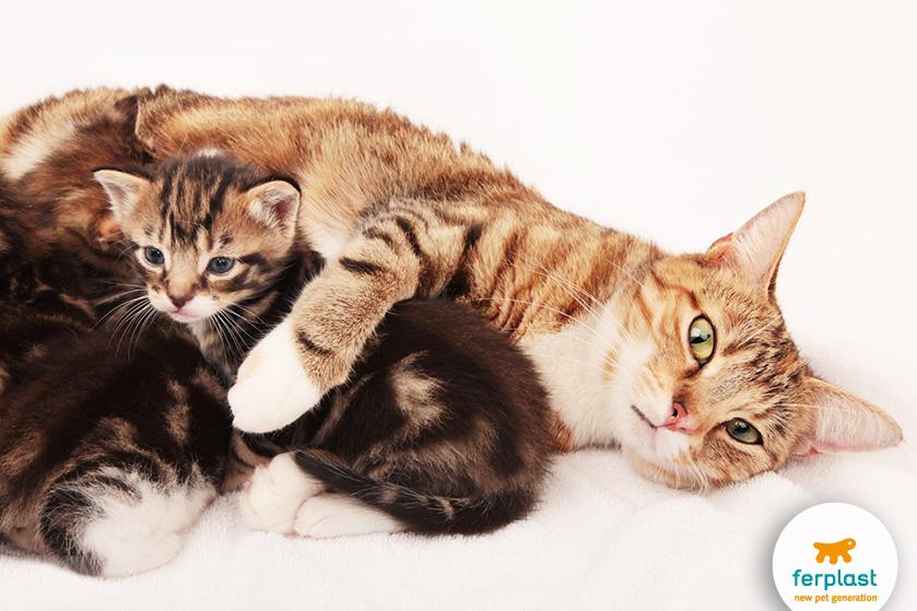 gattina_allatta