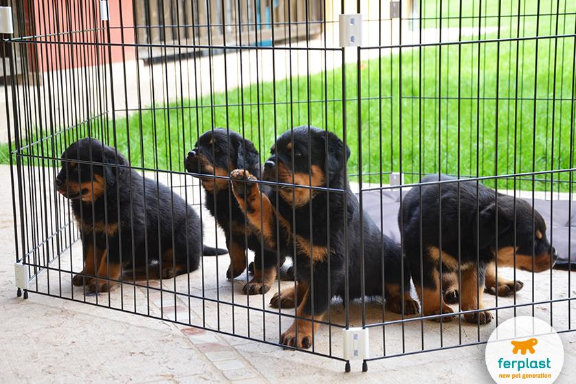 giocare_con_cani_piccoli