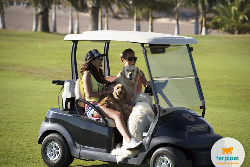giocare_golf_cane