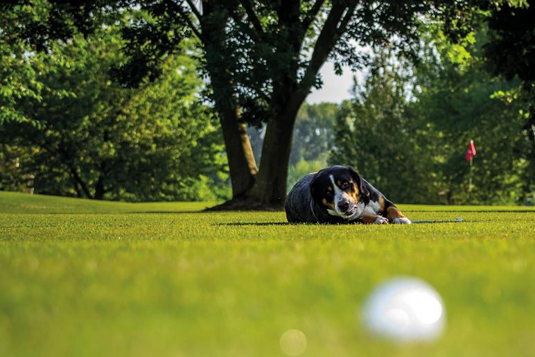 golf_cane