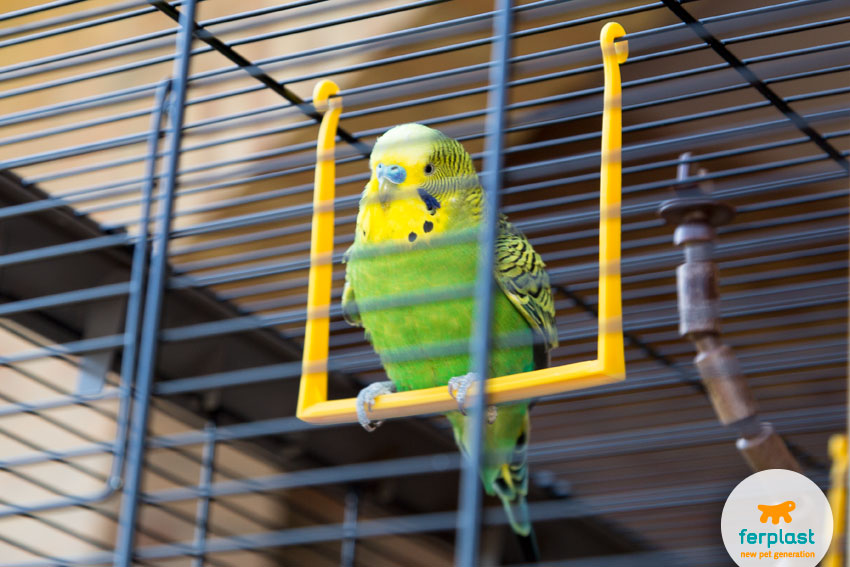 cute green parakeet playing on a swing