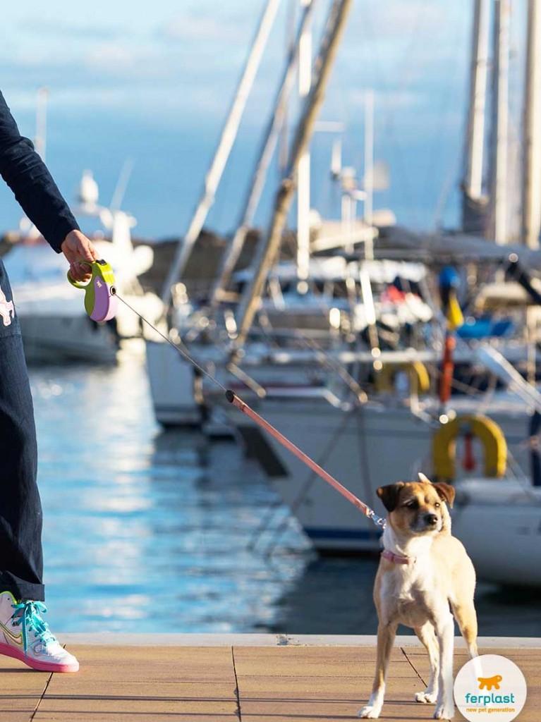 viajar de navio com seu cão