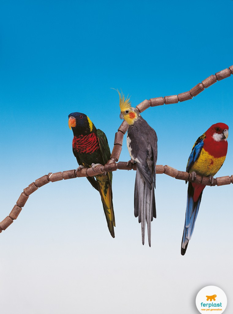 pappagalli_gabbia