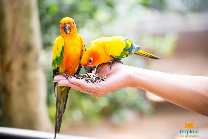 papagaio gaiola ferplast