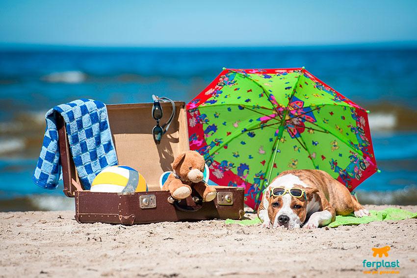 portare il cane in spiaggia