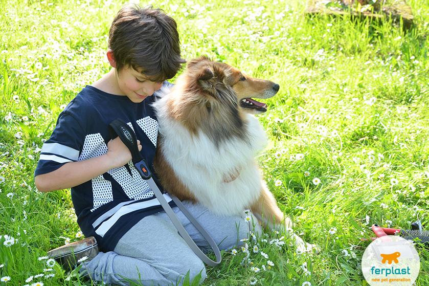 portare_cani_a_passeggio