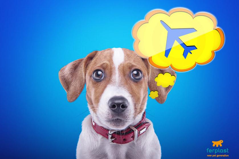 regulaciones_de_aerolíneas_mascotas_delta_airlines