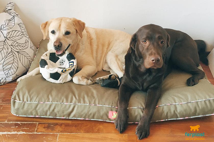 Cães e problemas com as patas