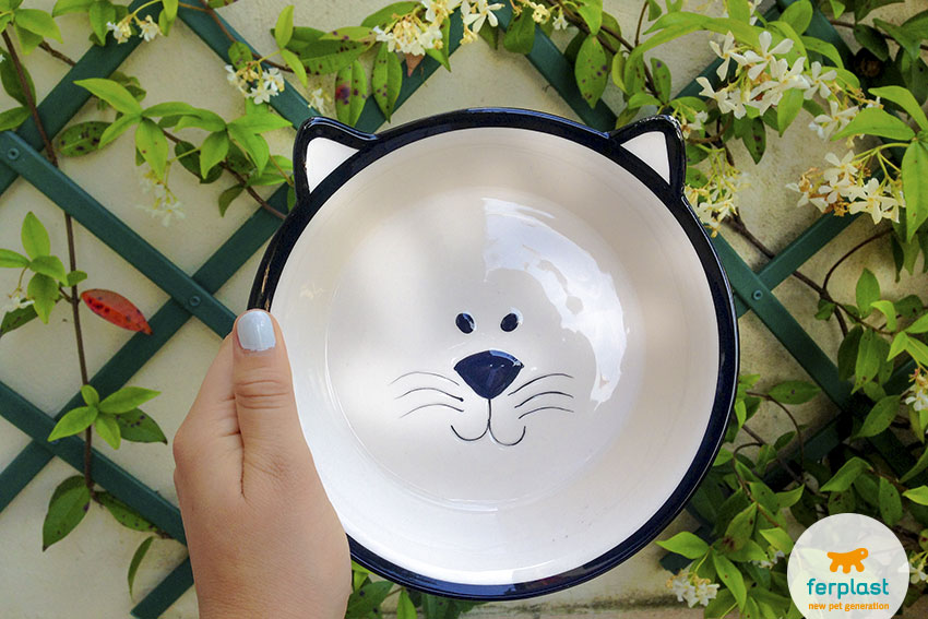 bowl for cats venere