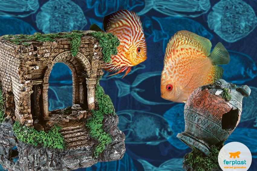cuidar do seu aquário dicas uteis
