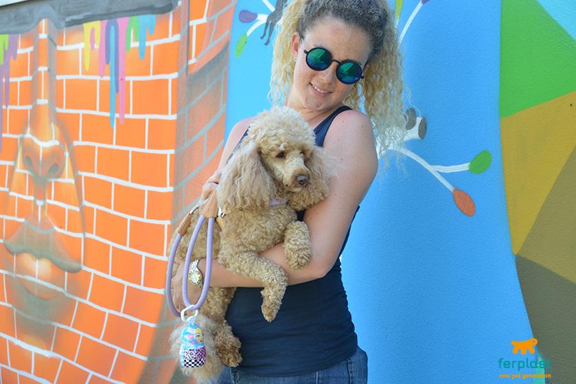 características e personalidade dos poodles miniatura