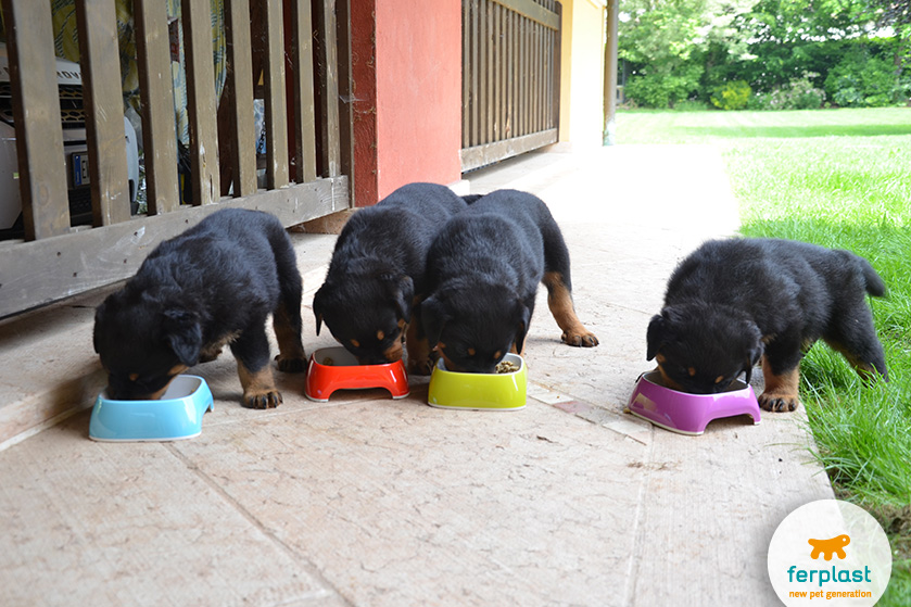 tigelas Glam cães