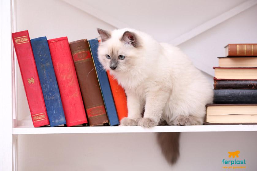 porque os gatos gostam de lugares altos