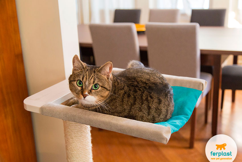 porque-os-gatos-gostam-de-lugares-altos