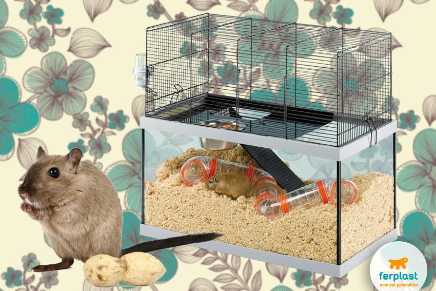 Piccoli roditori domestici quale scegliere love ferplast for Piccoli piani di casa per nidificanti vuoti
