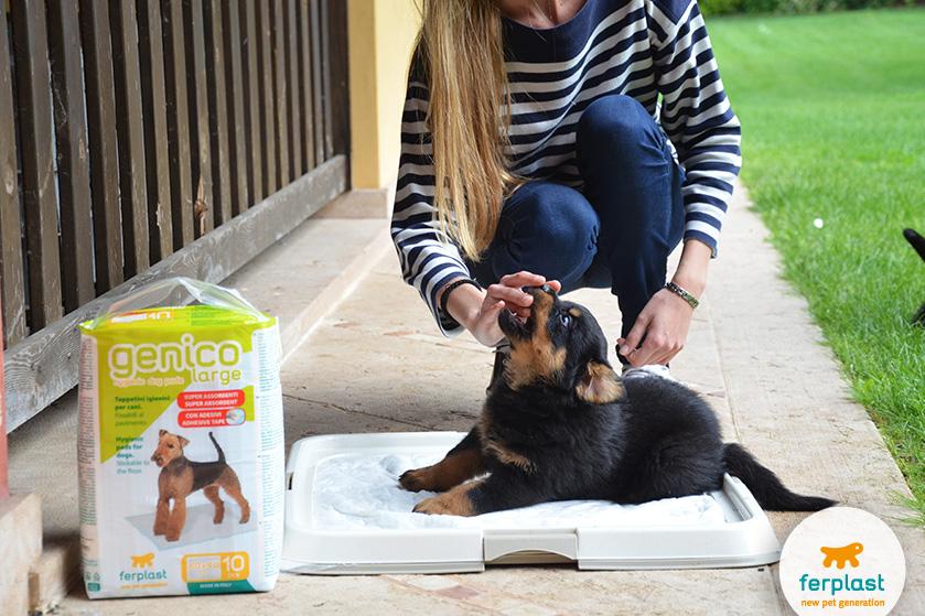 I cuccioli e la pip prova i migliori tappetini igienici - Eliminare odore pipi cane giardino ...