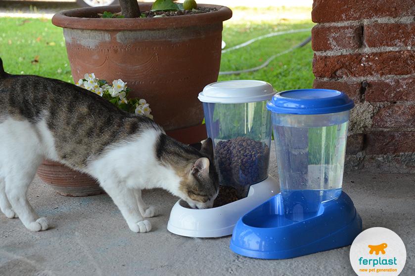 lasciare_gatto_in_casa_da_solo