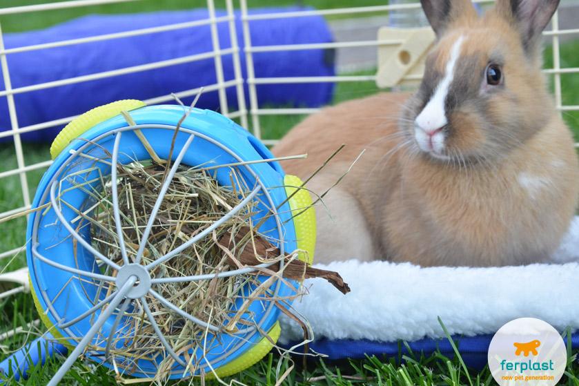mangiatoia-fieno-conigli