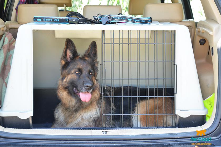 viajar com cães de grande porte