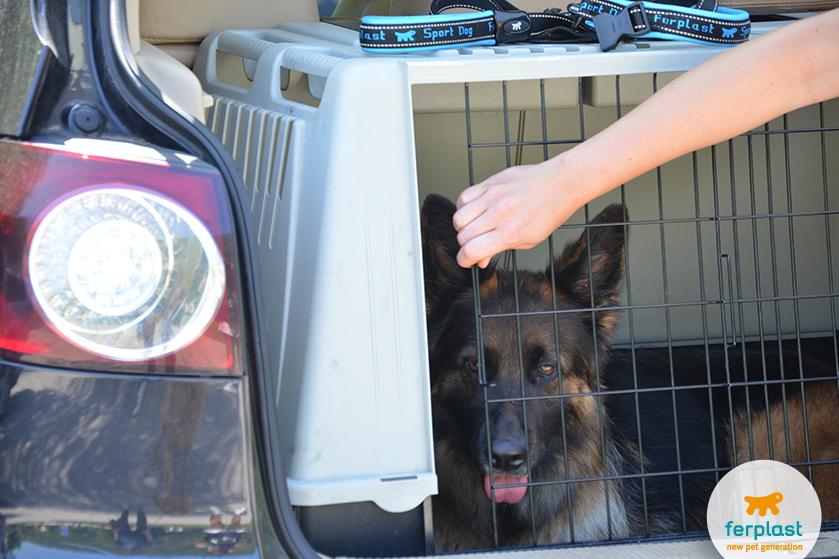 transportador para cães de porte grande